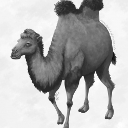 Artwork: Two-Humped Camel